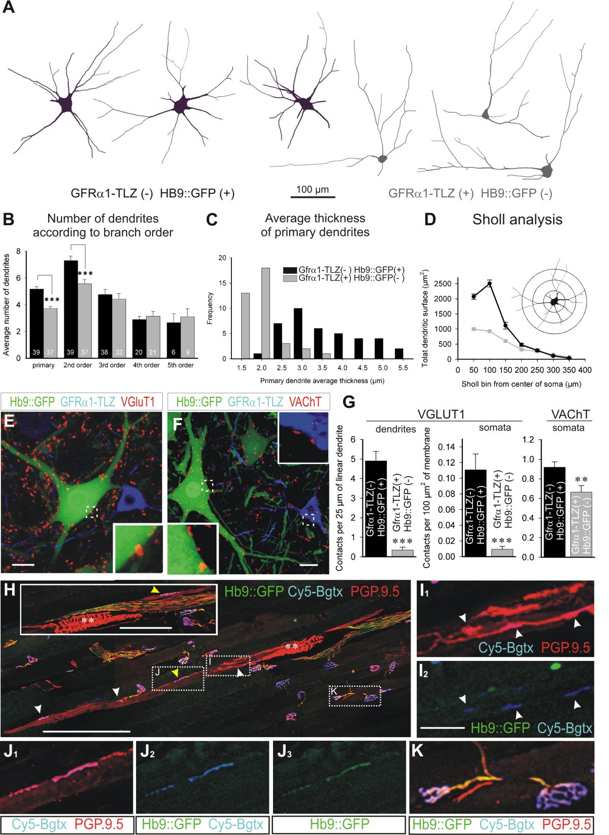 Gamma Motor Neurons Express Distinct Genetic Markers At Birth And September 1 2009 By Wiring Diagrams Leave A Comment Figure 4