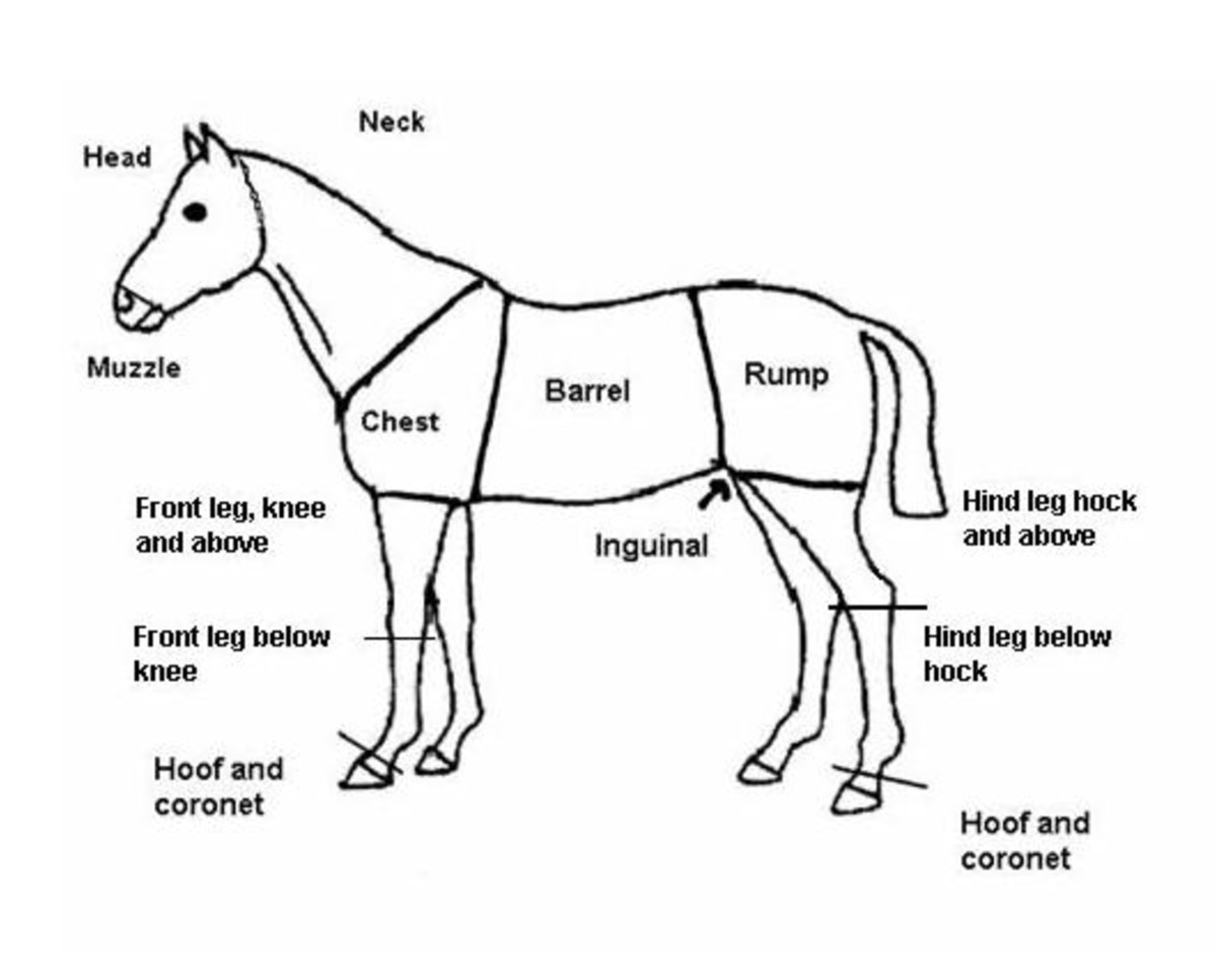 Reliability of an injury scoring system for horses | Acta ...