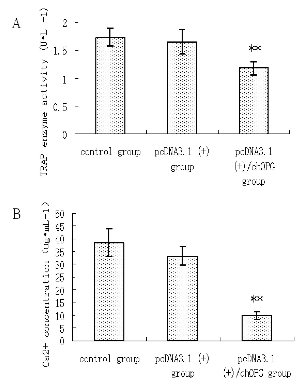 Effects of osteoprotegerin from transfection of pcDNA3 1(+