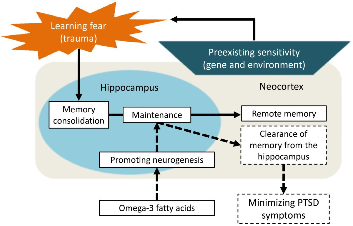 Clearance of fear memory from the hippocampus through ...