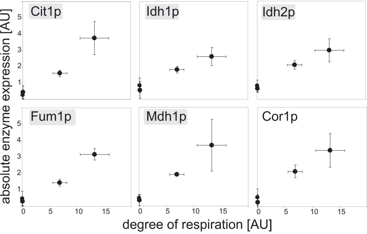 Transcriptional Regulation Of Respiration In Yeast Metabolizing