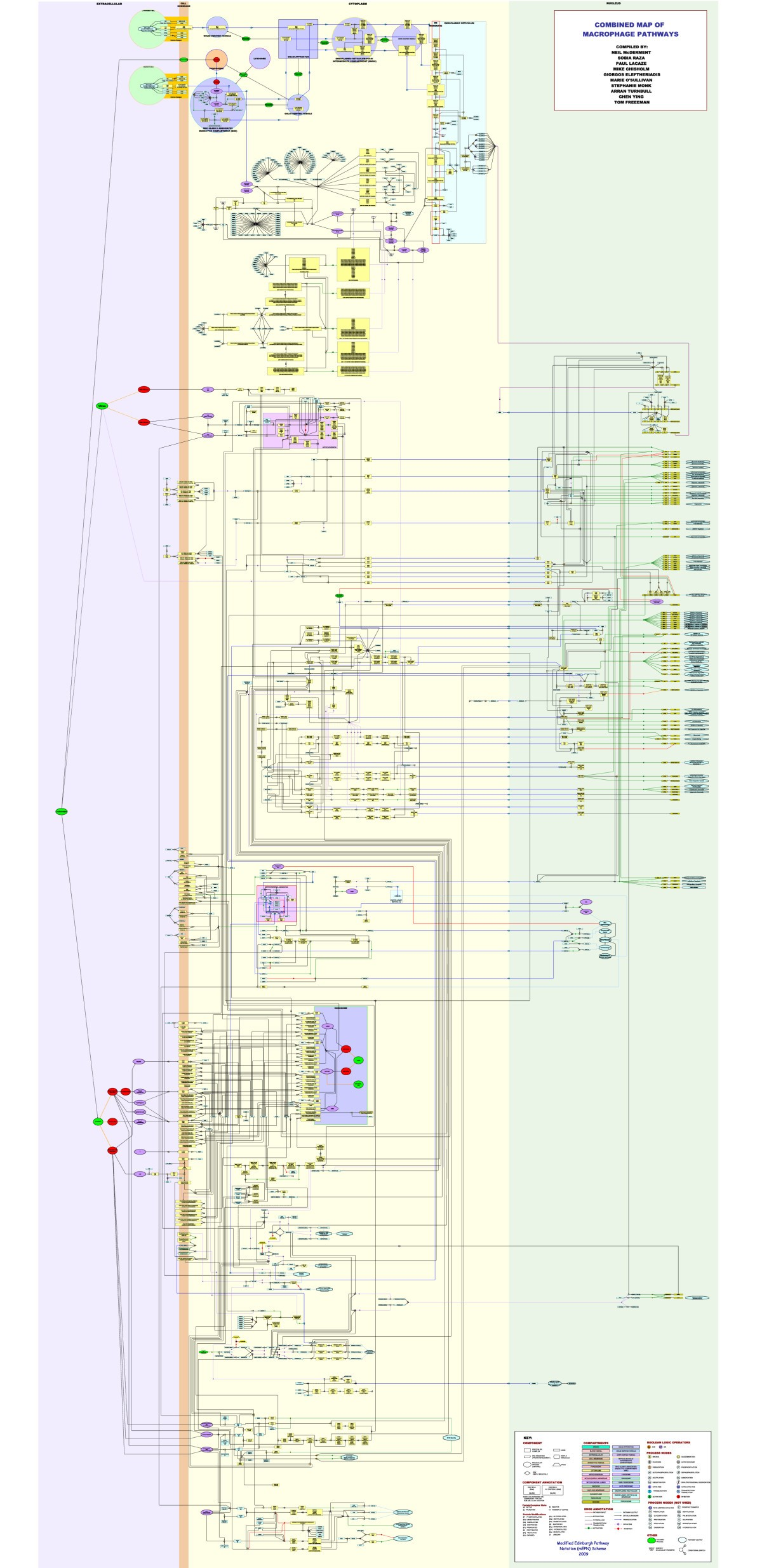Construction Of A Large Scale Integrated Map Macrophage Pathogen 79 Honda Pa 50 Wiring Diagram Figure 2
