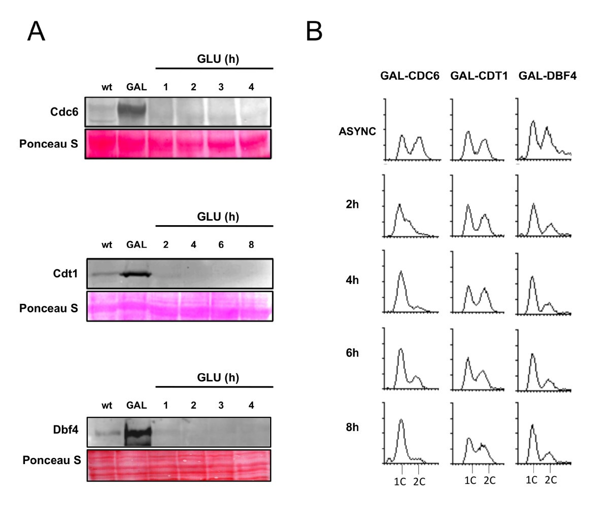 A Quantitative Model Of The Initiation Dna Replication In Rcs Prevents Triggering Timer B Unless Is Triggered By Figure 6