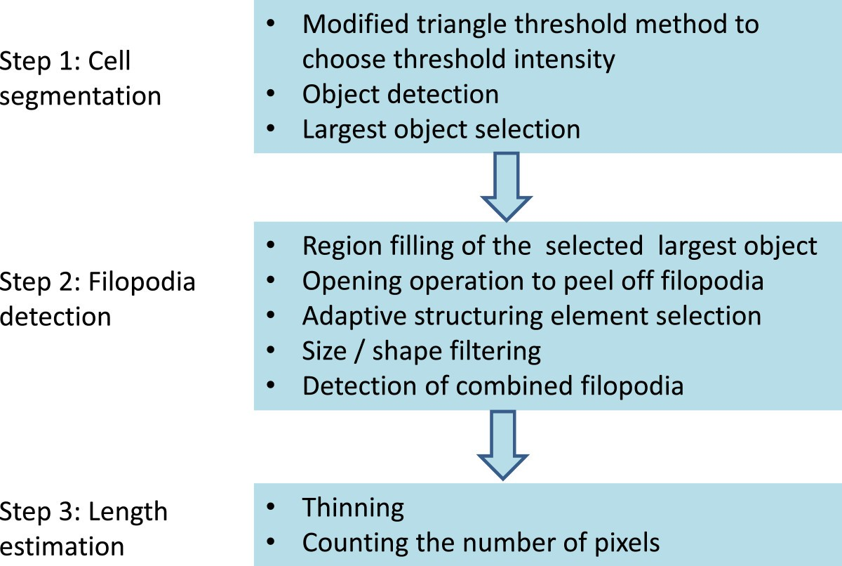 FiloDetect: automatic detection of filopodia from fluorescence ...