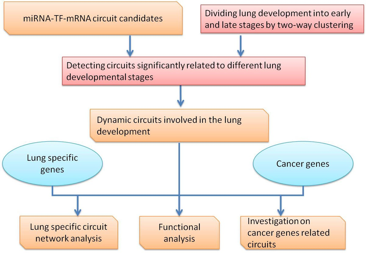 Characterizing Dynamic Regulatory Programs In Mouse Lung Development Figure 435 Rc Integrator Circuit 2