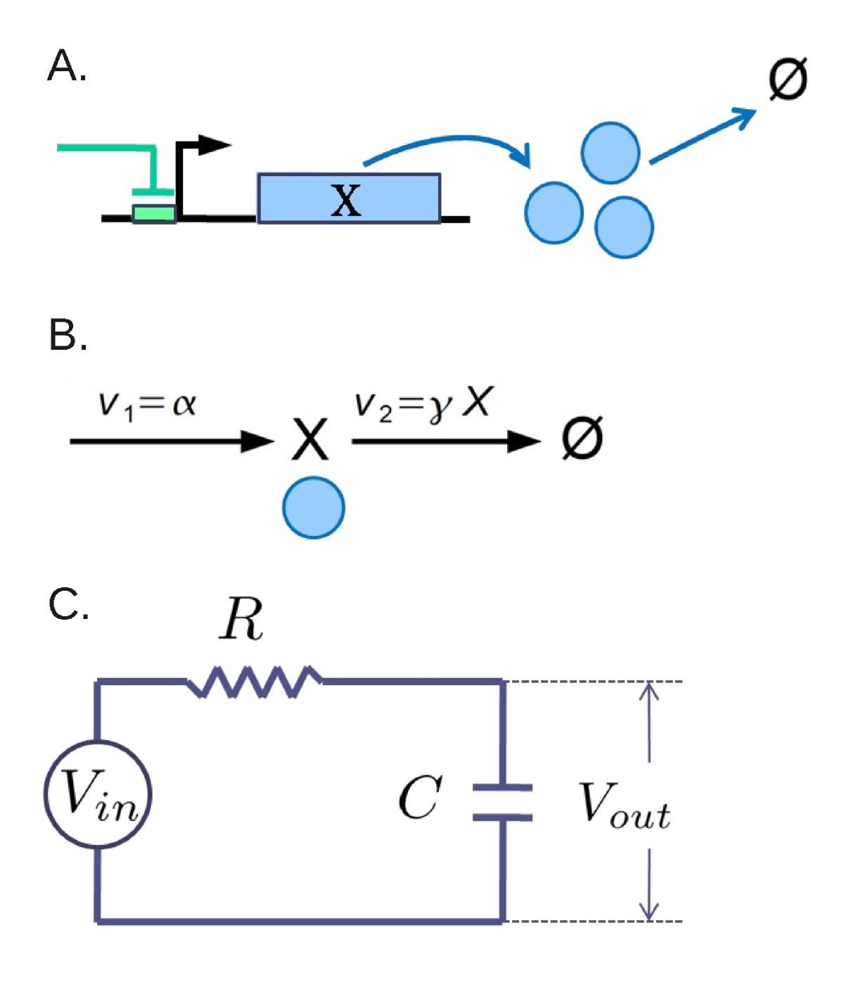 Fan Out In Gene Regulatory Networks Journal Of Biological Yx Wiring Diagram Figure 2