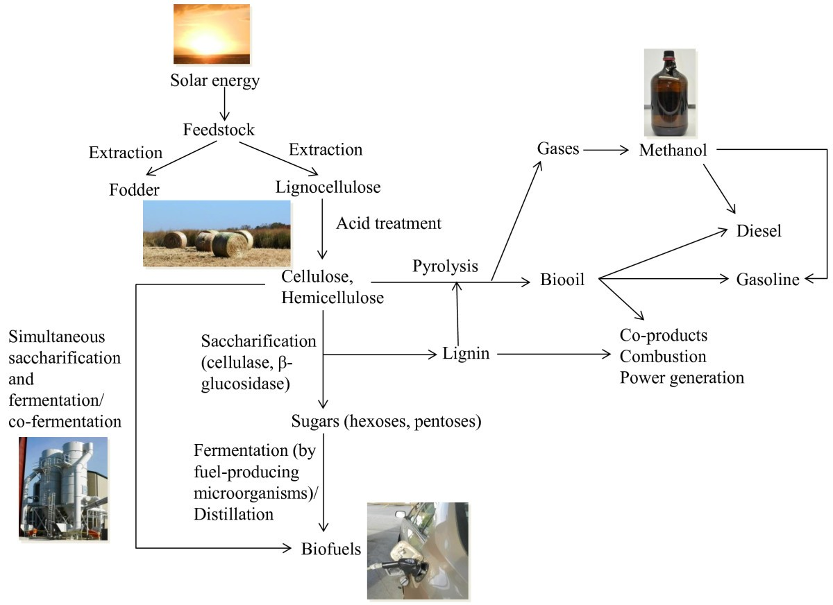 genomics of cellulosic biofuels Learn more about cellulosic ethanol productive chain of biofuels and industrial biocatalysis ayla sant'ana da silva,  in genomics and society, 2016 cellulosic biorefineries [79].
