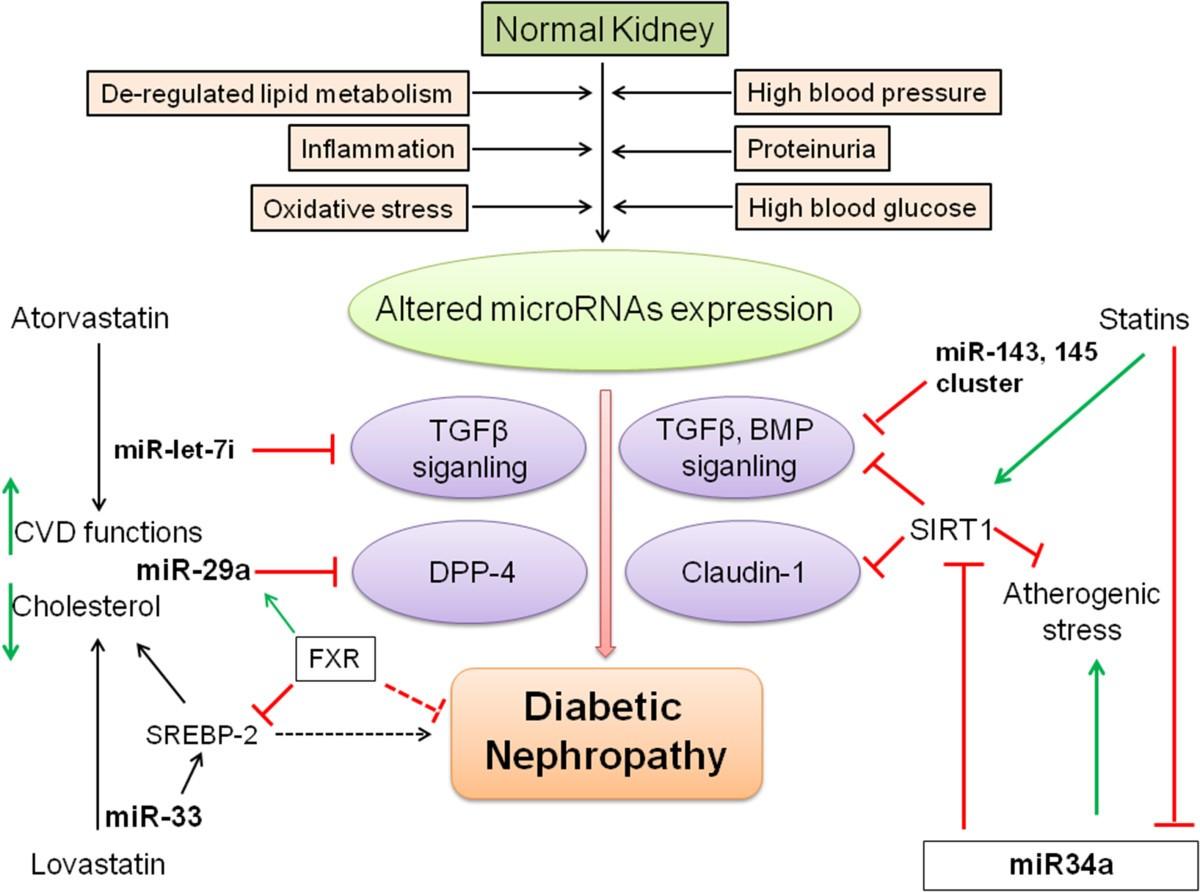 Uric Acid Pathway Lipid mediators in dia...