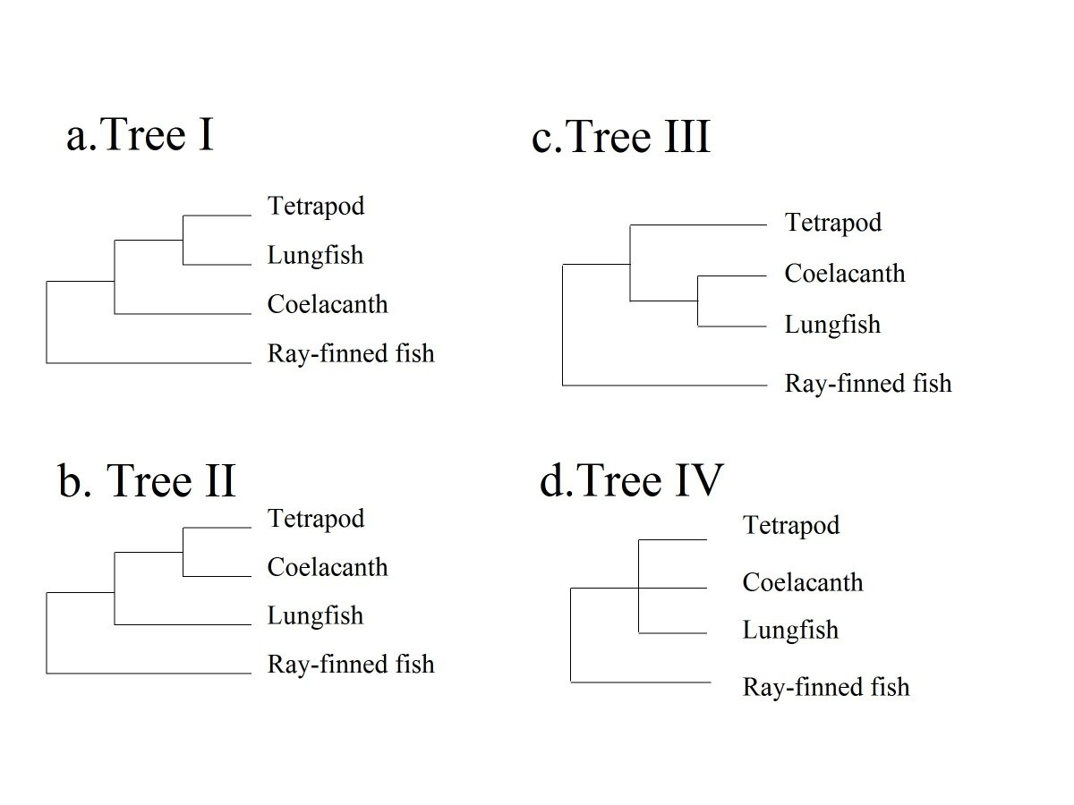 43 Genes Support The Lungfish Coelacanth Grouping Related To The