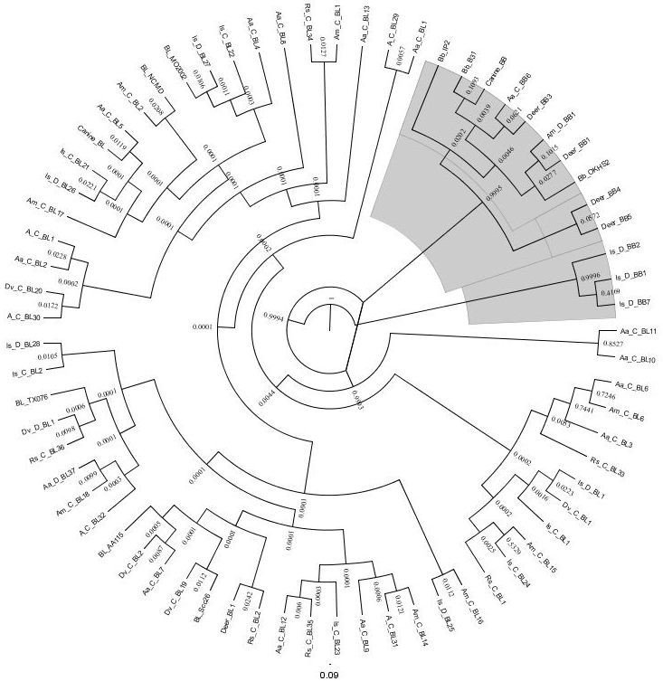 Survey Of Borreliae In Ticks Canines And White Tailed Deer From