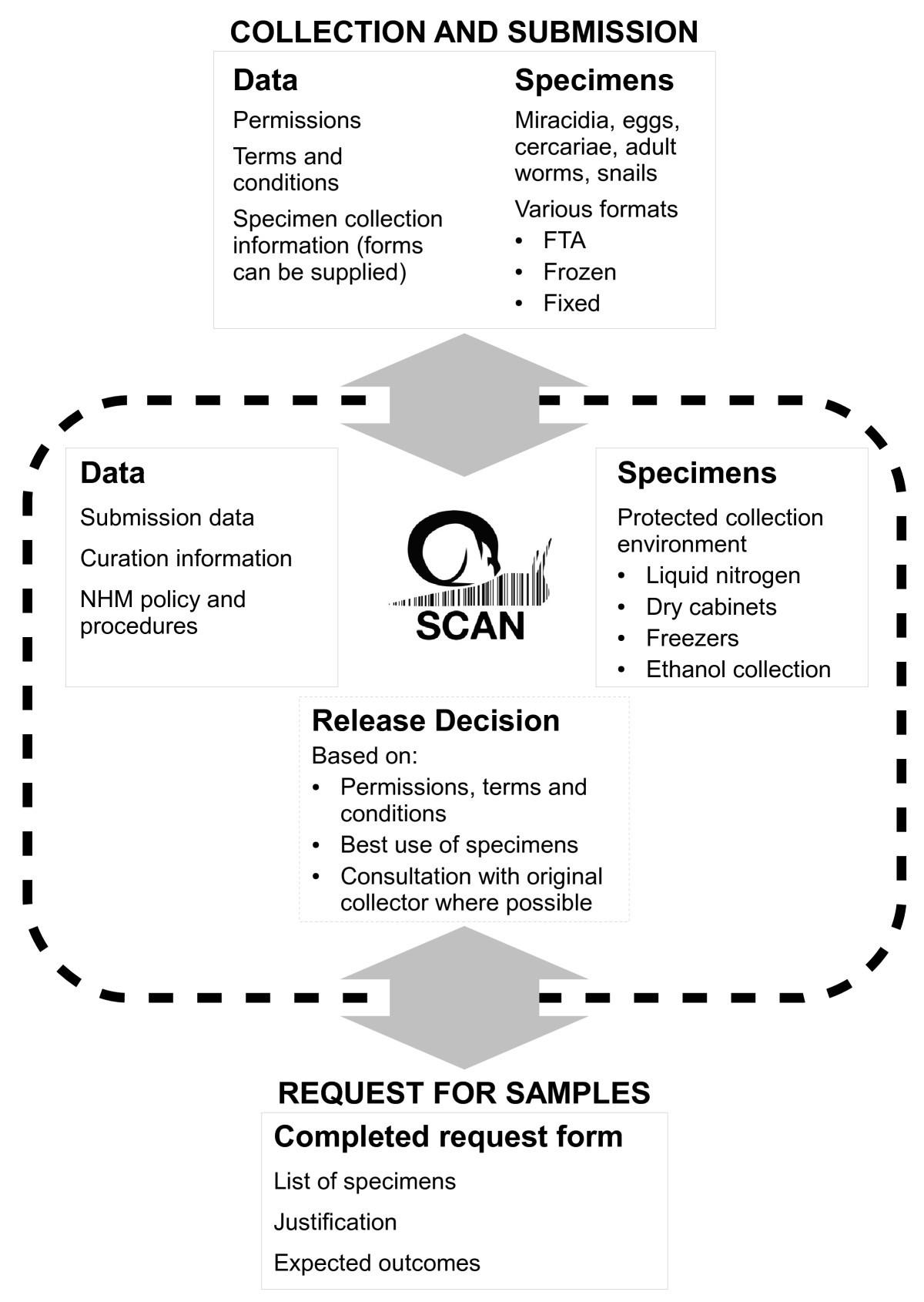schistosomiasis collection at nhm scan parasites vectors