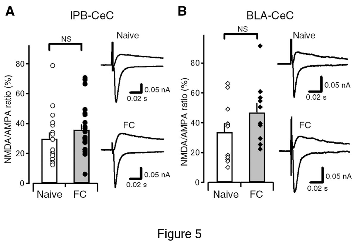 Synaptic Potentiation In The Nociceptive Amygdala Following Fear Old Block Diagram And Pare This With Figure2 New Learning Mice Molecular Brain Full Text
