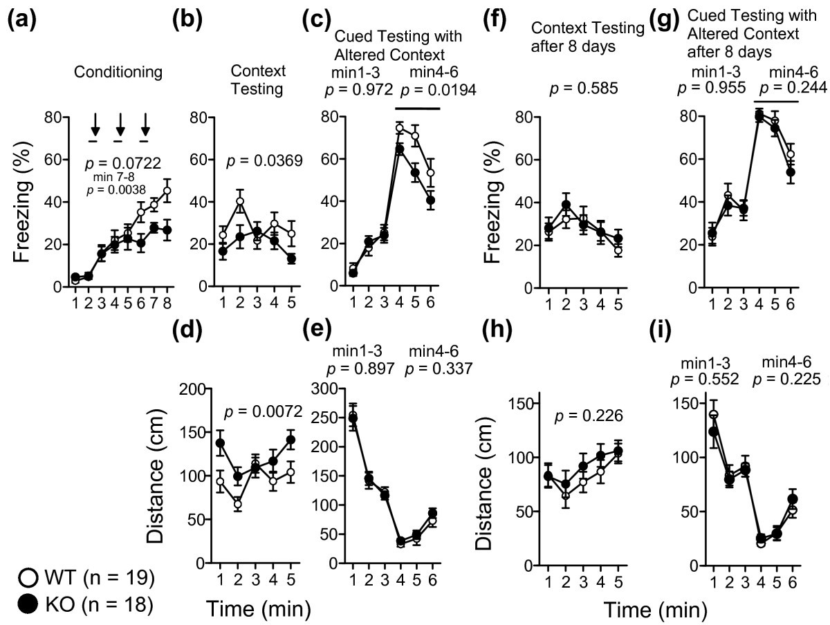 Comprehensive Behavioral Study Of Mglur3 Knockout Mice Implication Bruno Trans Brake Wiring Diagram Figure 6