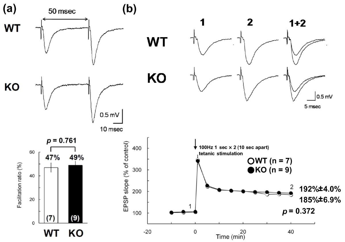Comprehensive Behavioral Study Of Mglur3 Knockout Mice Implication Bruno Trans Brake Wiring Diagram Figure 7