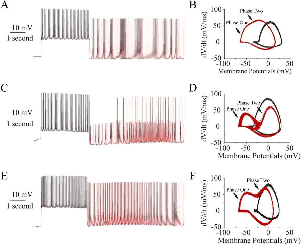 Voltage independent sodium channels emerge for an expression of figure 3 ccuart Gallery