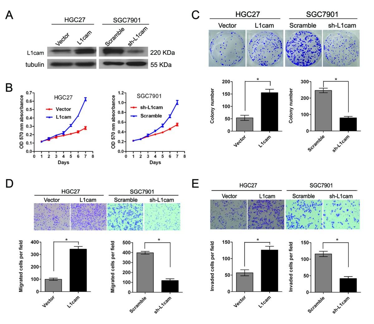 L1cam Promotes Tumor Progression And Metastasis Is An Electronic Scoreboard With The Above Ic 4033 Counter Circuit Figure 3