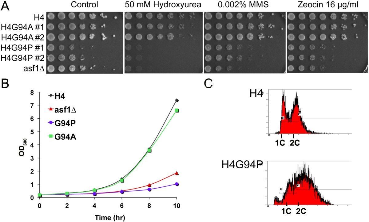 The Conformational Flexibility Of C Terminus Histone H4 Image Line Dance Step Diagrams Download Figure 2
