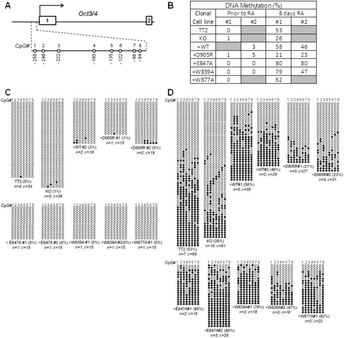 Role Of Distinct Surfaces Of The G9a Ankyrin Repeat Domain