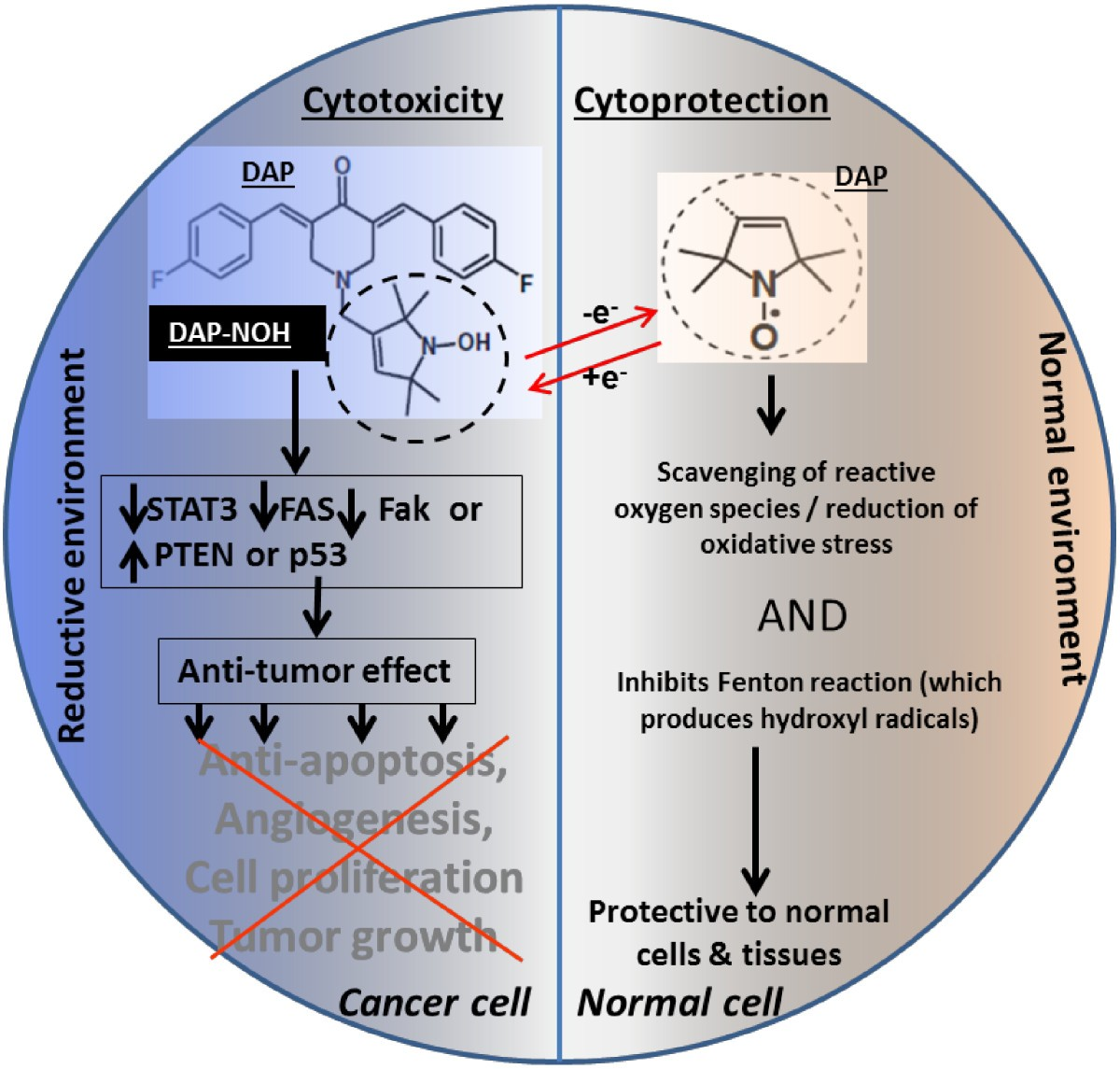 Safe And Targeted Anticancer Therapy For Ovarian Cancer Using A Fig Schematic Diagram Of Ballmill Sourcearmstrong Figure 2