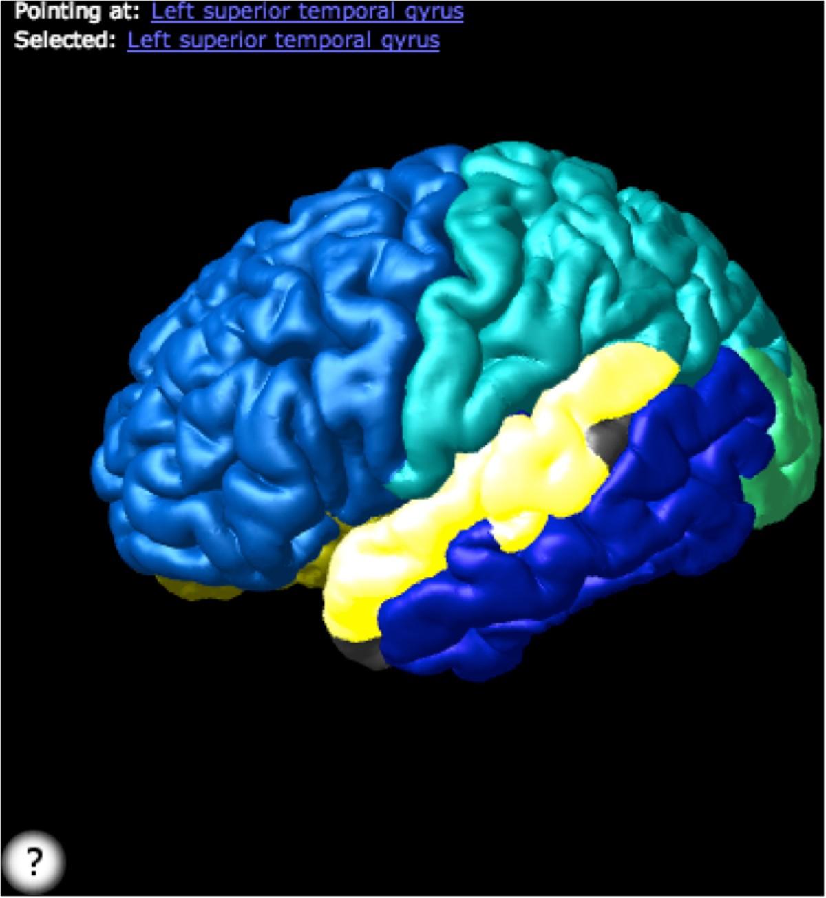 Neuroanatomical domain of the foundational model of anatomy ontology ...