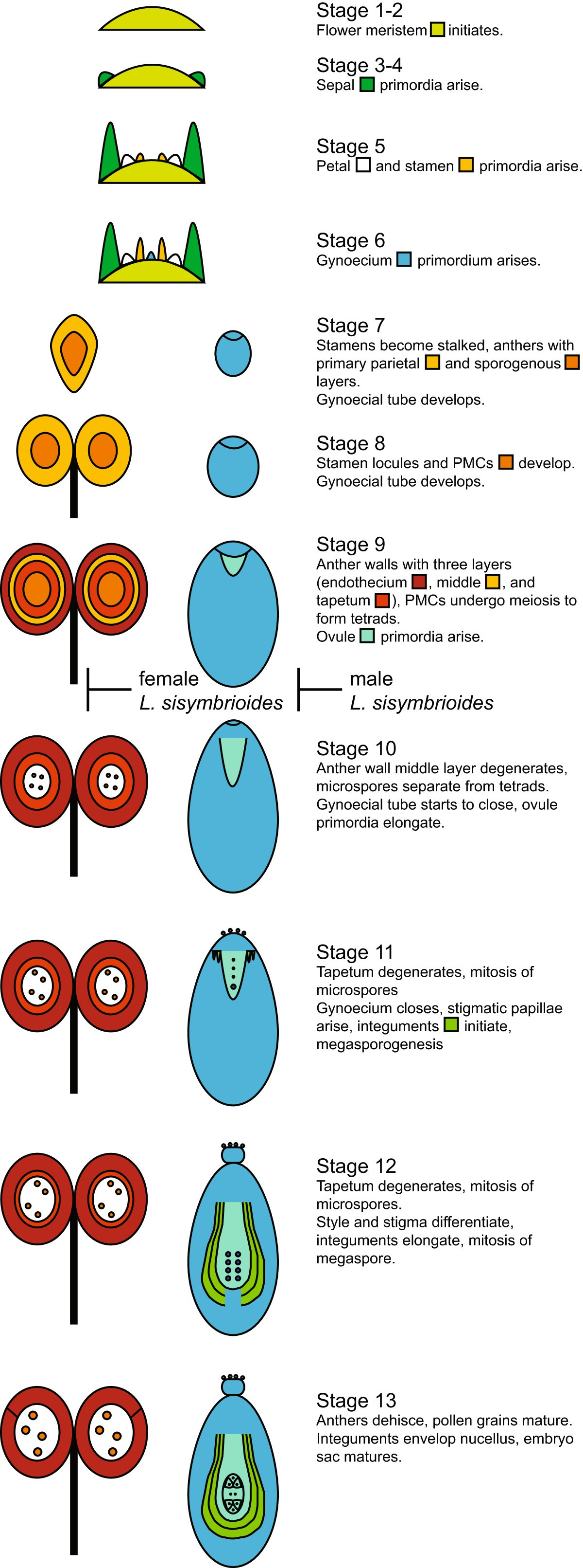 Pattern And Process In The Evolution Of Sole Dioecious Member Olds 1991 Fuse Box Figure 7