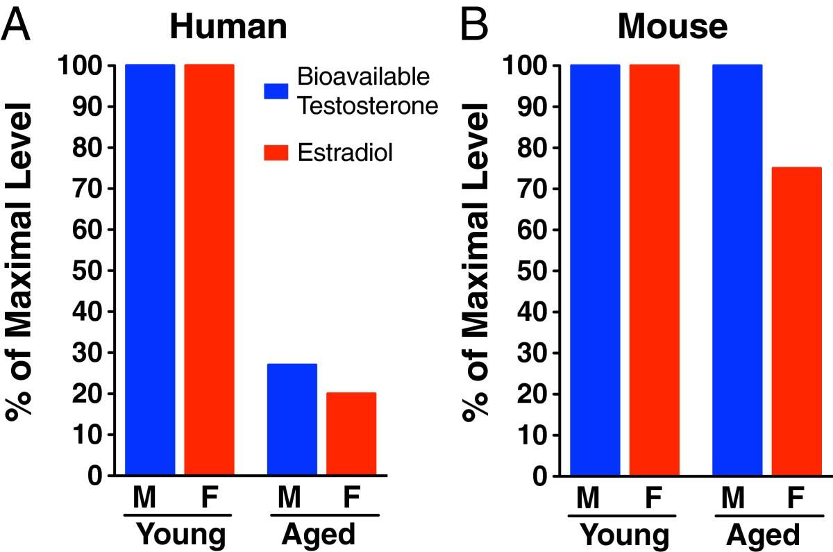 Sex and gonadal hormones in mouse models of Alzheimer's disease