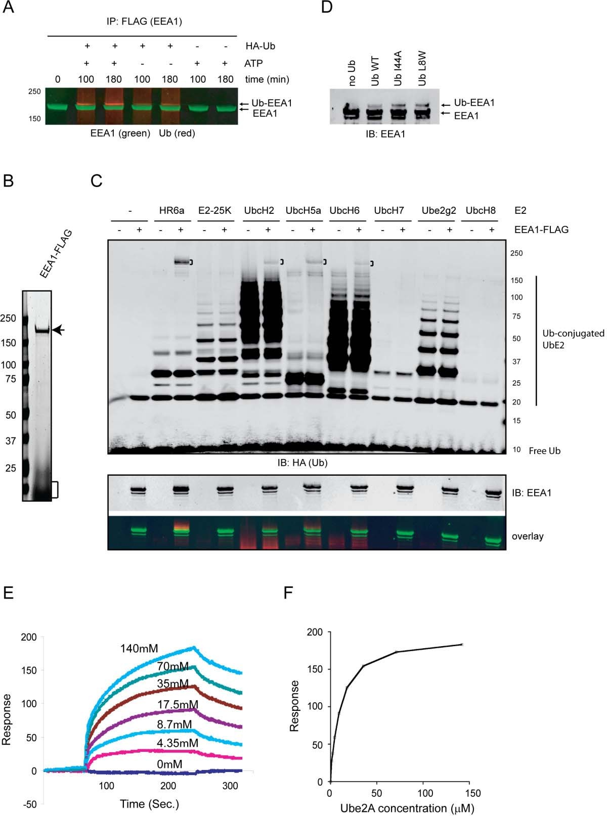Monoubiquitination Of Eea1 Regulates Endosome Fusion And Trafficking High Current 5 Volt Regulator Electrical Engineering Stack Exchange Figure 2