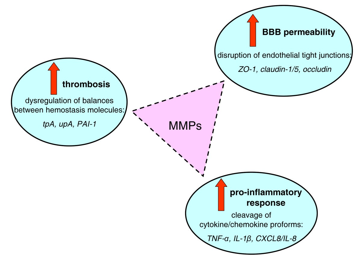Host matrix metalloproteinases in cerebral malaria new kids on figure 5 pooptronica Image collections