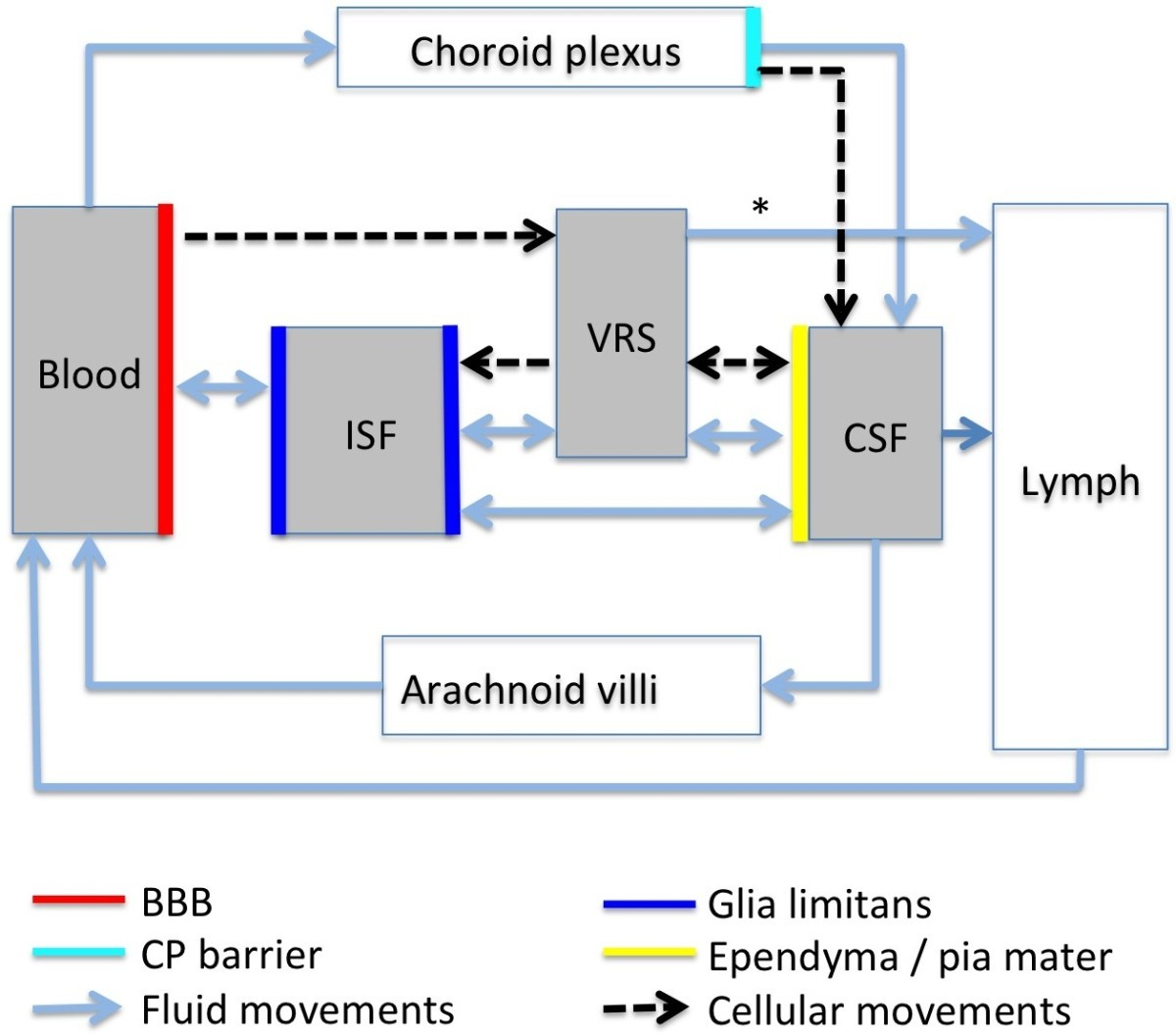 A New Look At Cerebrospinal Fluid Circulation Fluids And Barriers Diagram 88 The Internal Structure Blood Flow Through Heart Figure 3 Of Csf