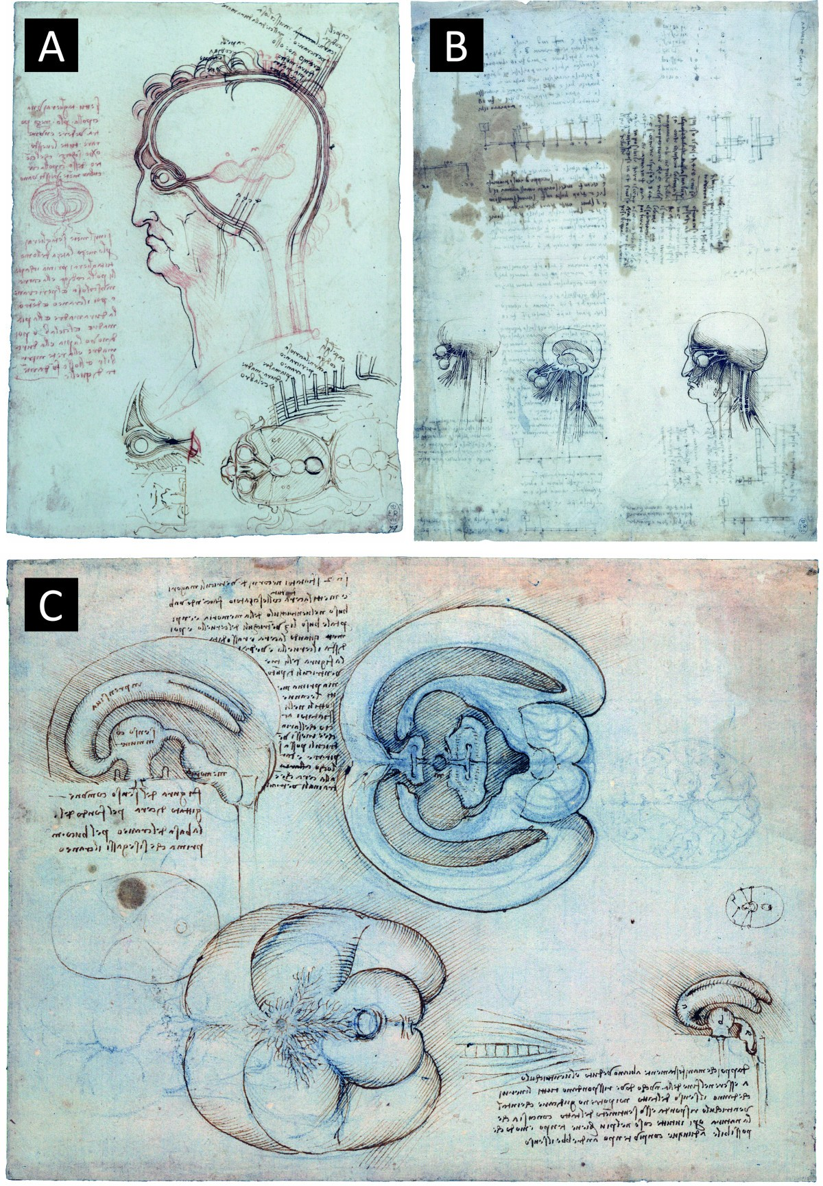 Fluids and barriers of the CNS: a historical viewpoint | Fluids and ...