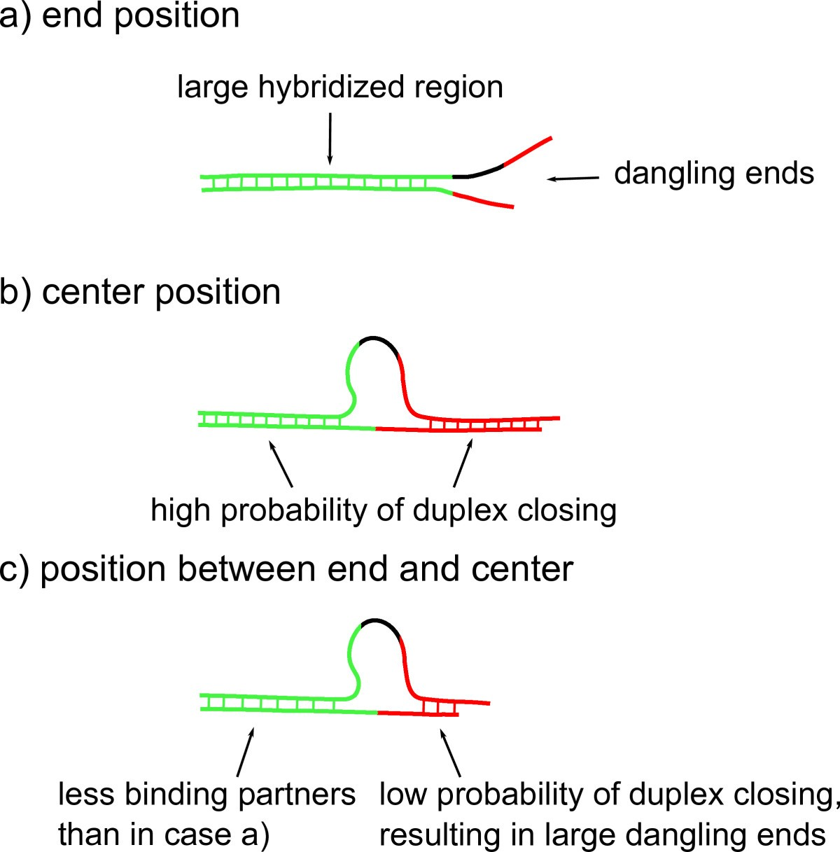 Stability of double-stranded oligonucleotide DNA with a bulged loop