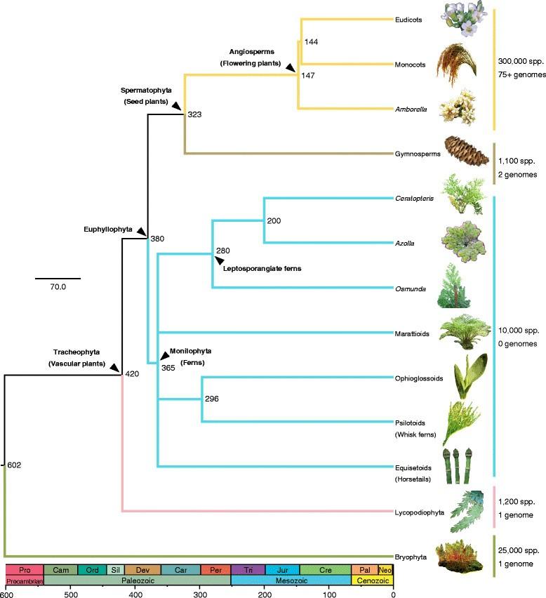 heterospory and seed habit in pteridophytes