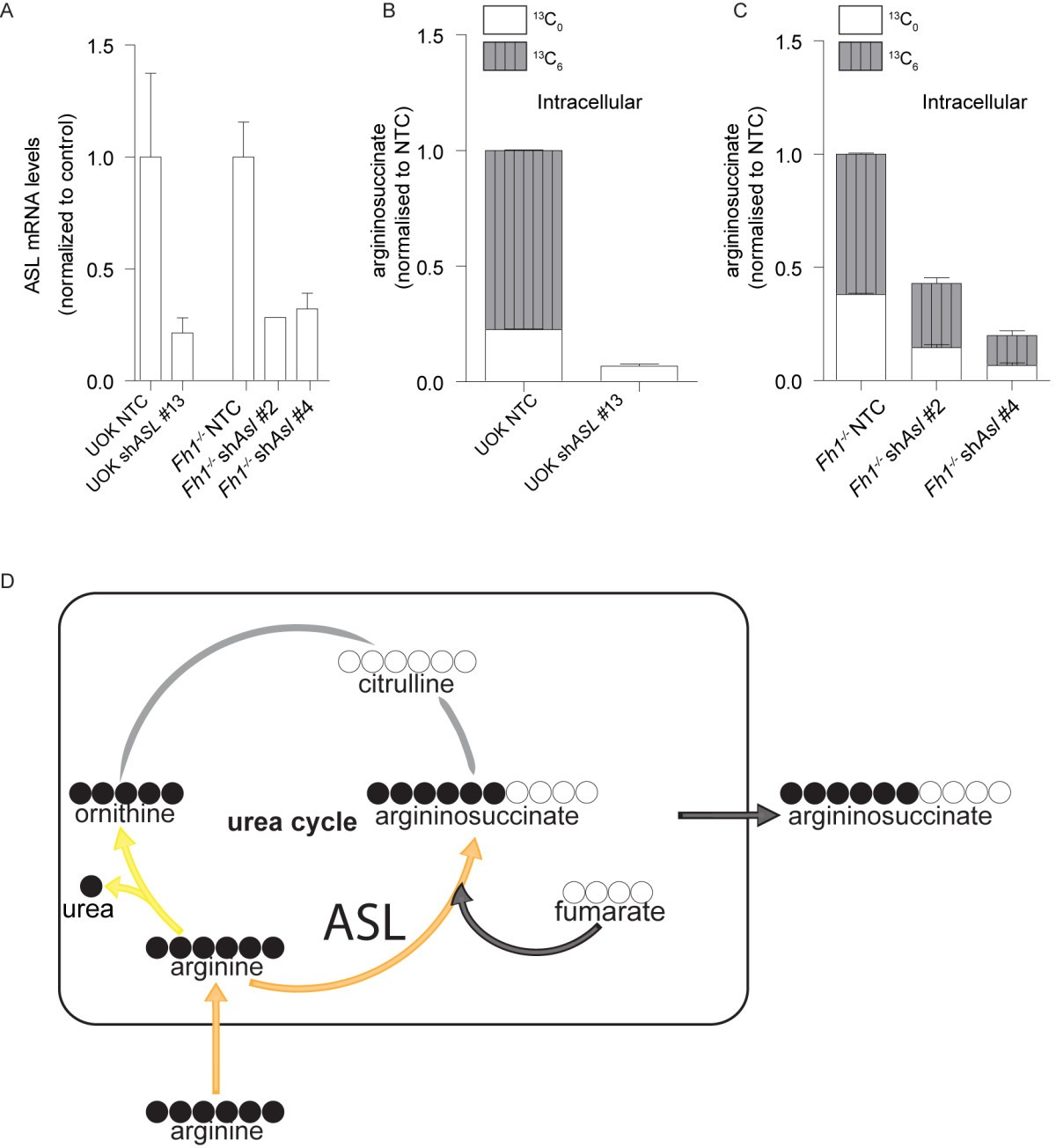 Reversed Argininosuccinate Lyase Activity In Fumarate Hydratase Ntc Selection Criteria Steady State Current Figure 4