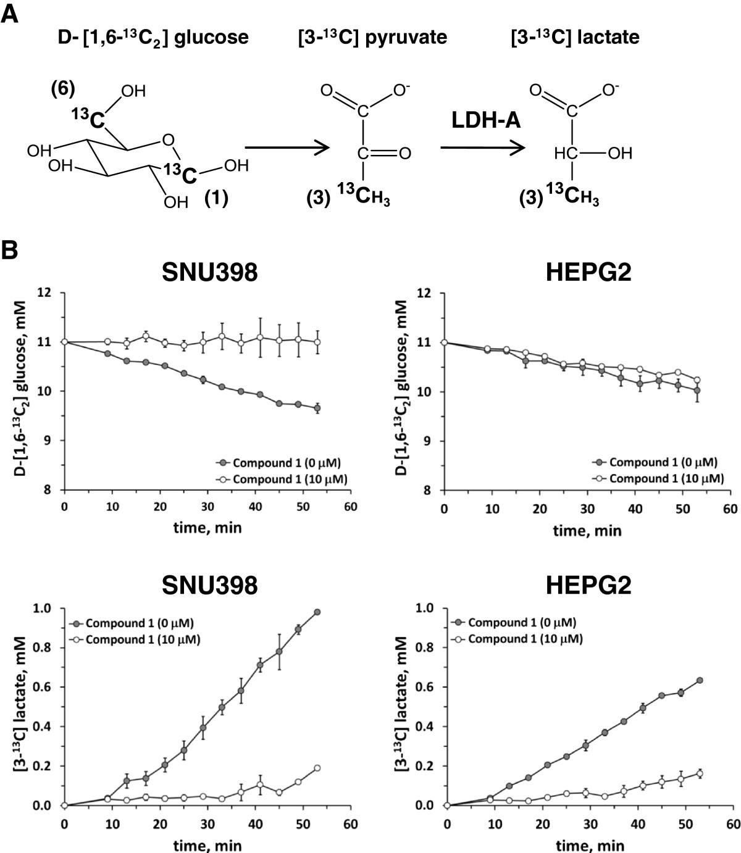 Quinoline 3 Sulfonamides Inhibit Lactate Dehydrogenase A And Reverse