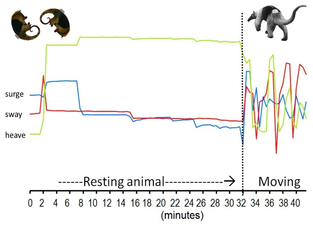 Observing The Unwatchable Through Acceleration Logging Of Animal Solutions Rc Circuit Des Graphs Vrvet In Green And V Figure 5