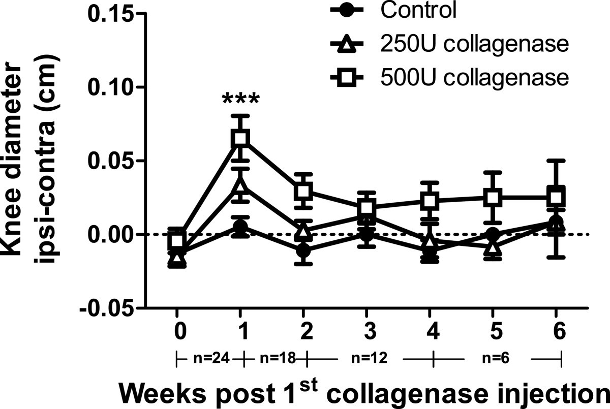 Intra articular injection of collagenase in the knee of rats as an figure 1 ccuart Gallery