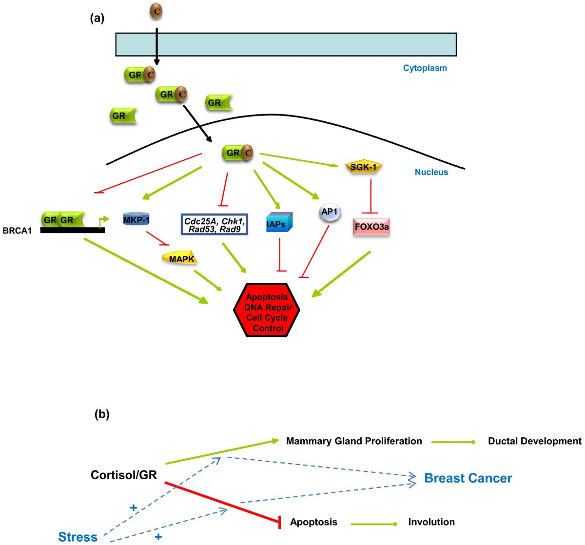 Stress And Breast Cancer From Epidemiology To Molecular Biology