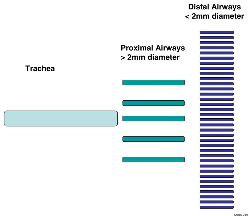 Bench-to-bedside review: Distal airways in acute respiratory ...
