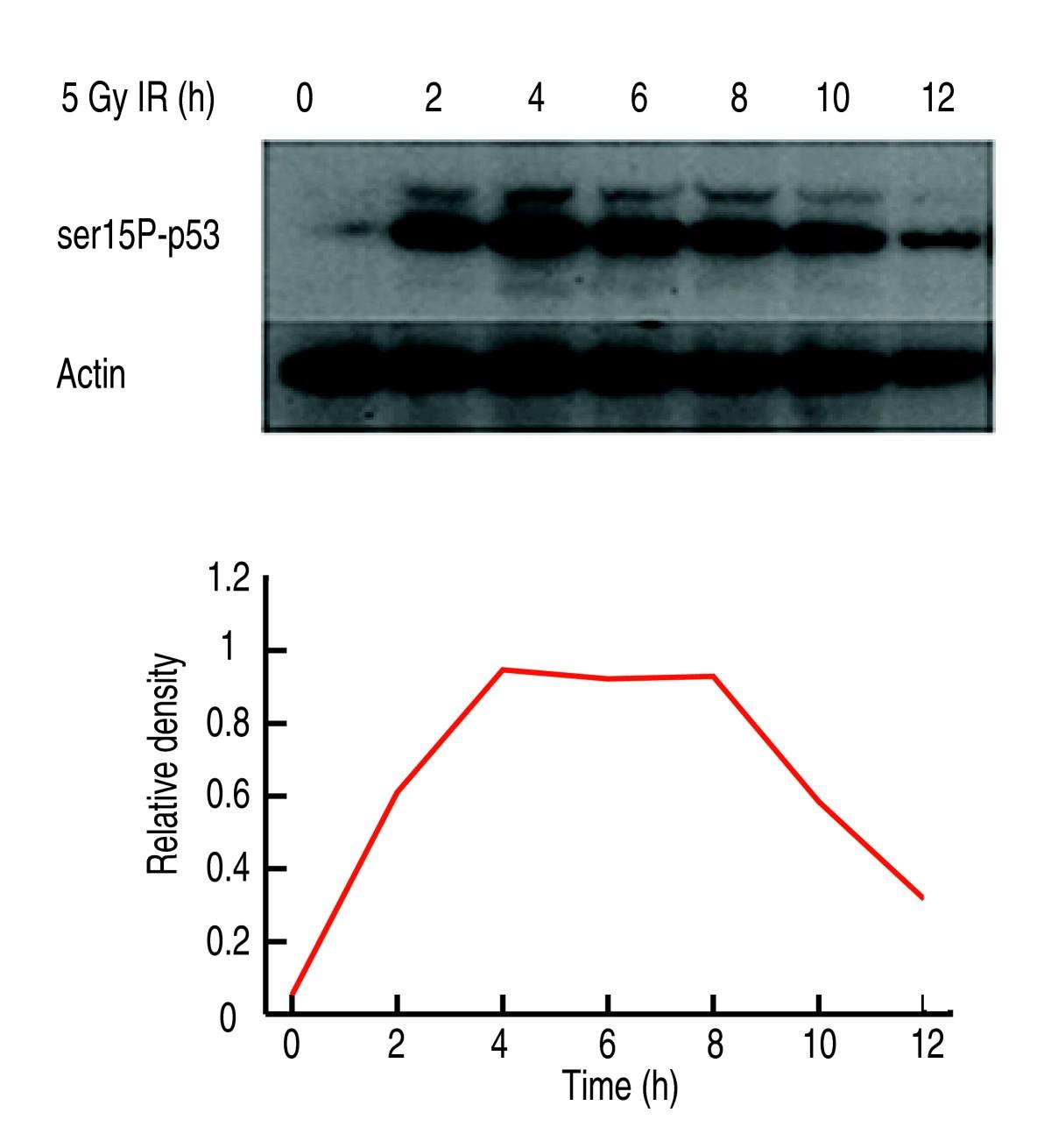 Ranked Prediction Of P53 Targets Using Hidden Variable Dynamic Jina Wiring Circuit Diagram Figure 3