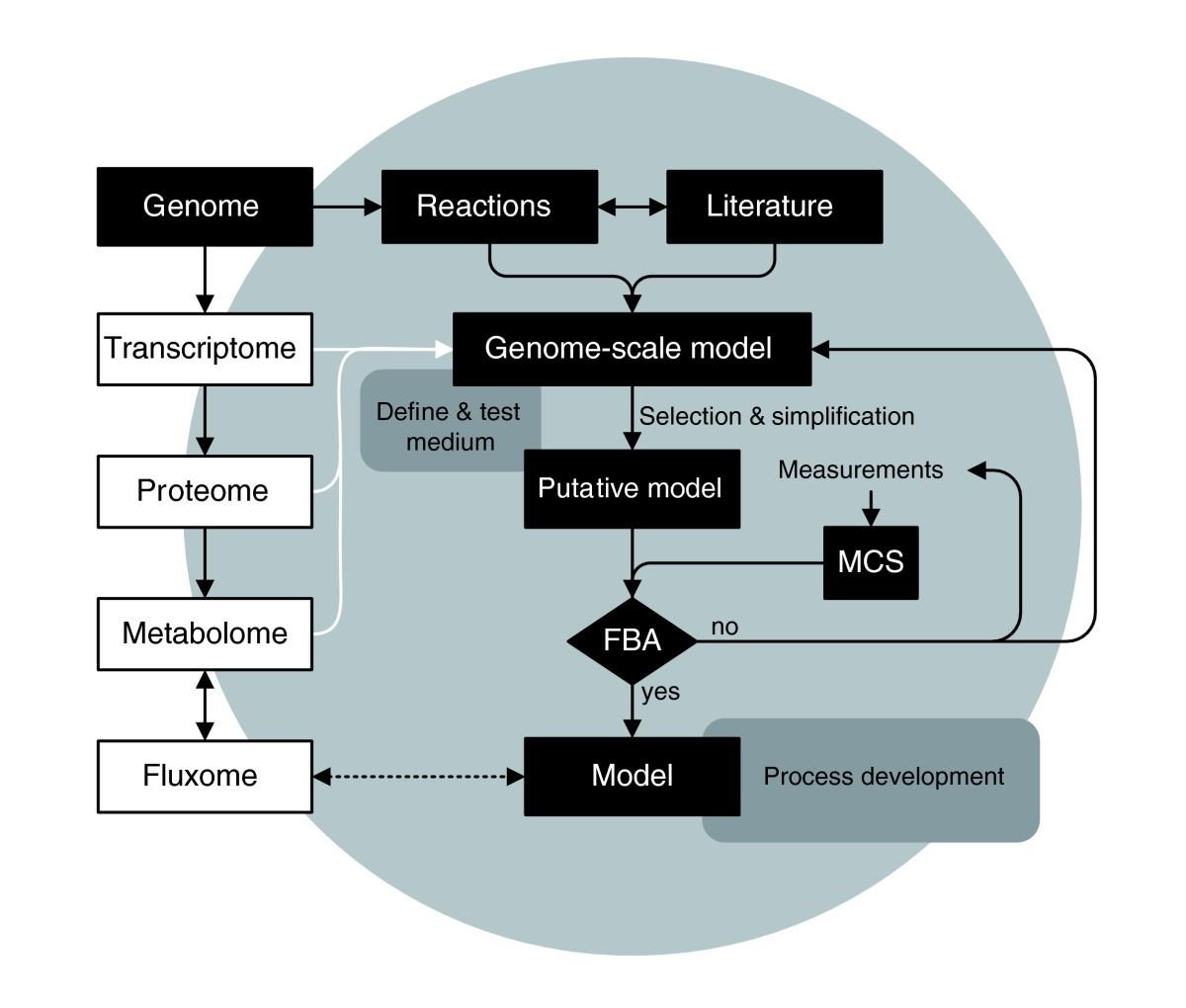 Modeling Neisseria meningitidis metabolism: from genome to metabolic ...
