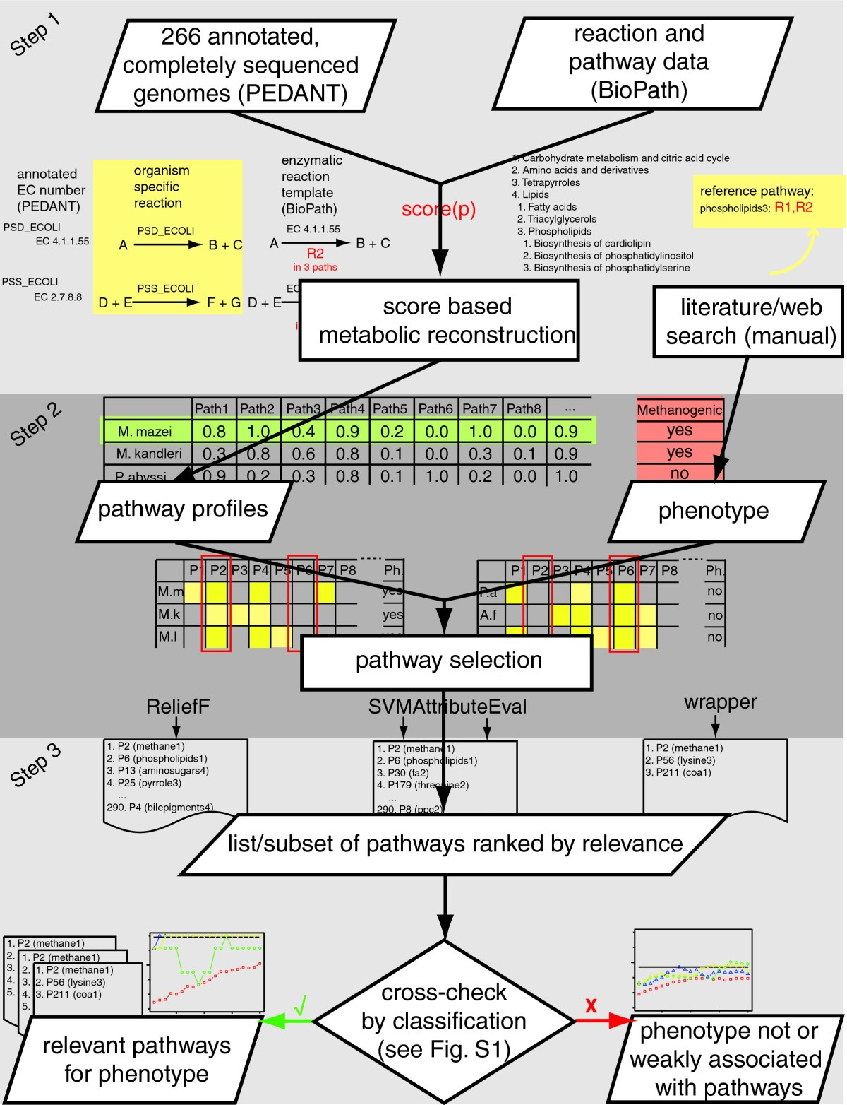 Uncovering metabolic pathways relevant to phenotypic traits of