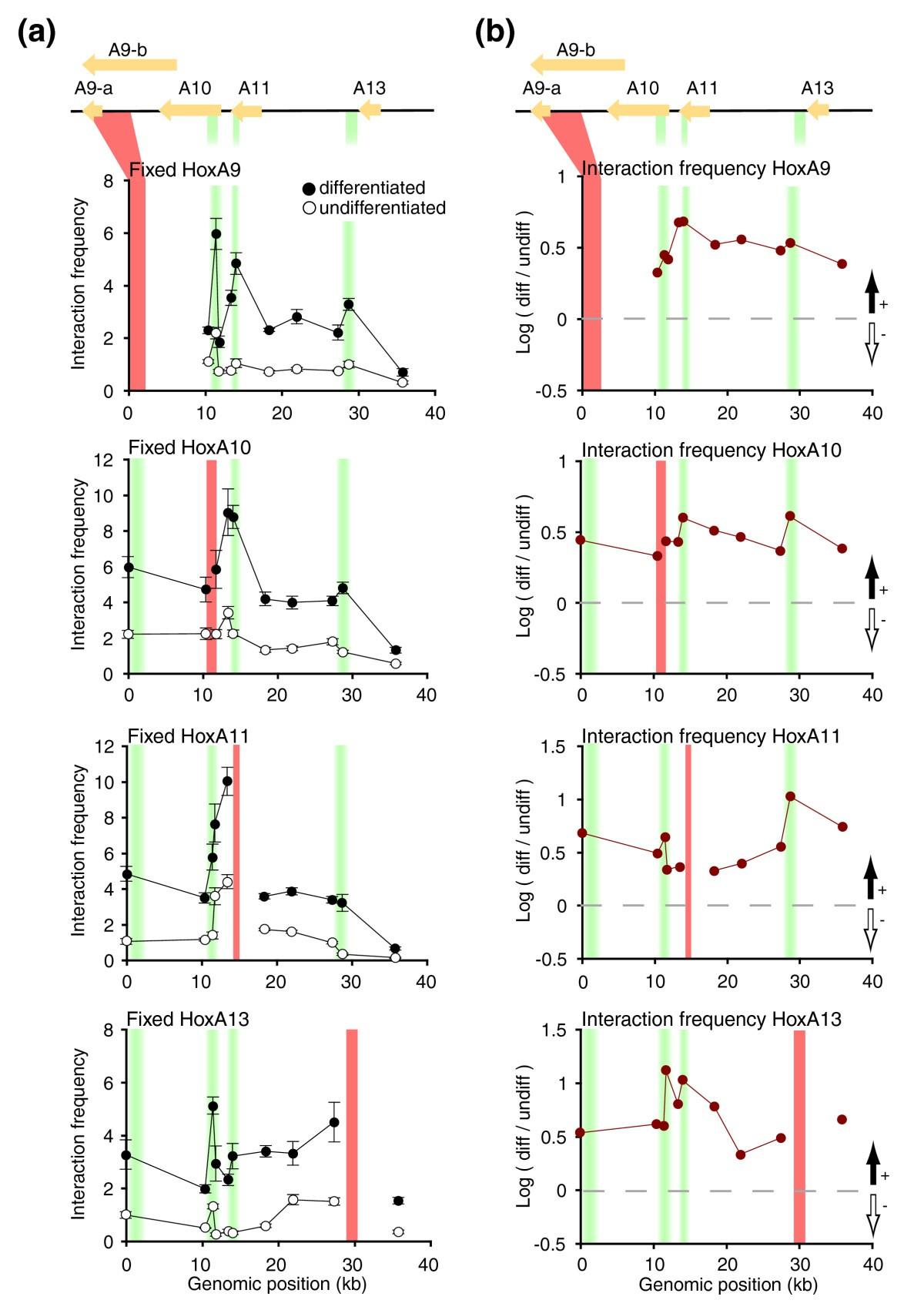 Chromatin Conformation Signatures Of Cellular Differentiation 2002 4 6l Triton Engine Diagram Figure 3