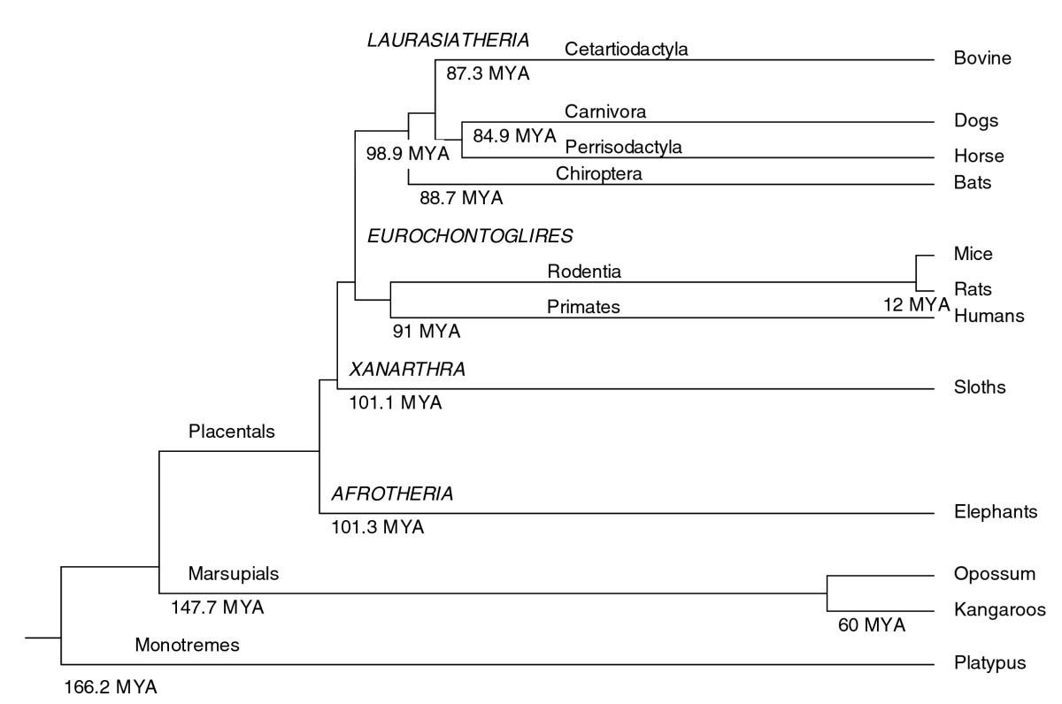 The bovine lactation genome: insights into the evolution of ...