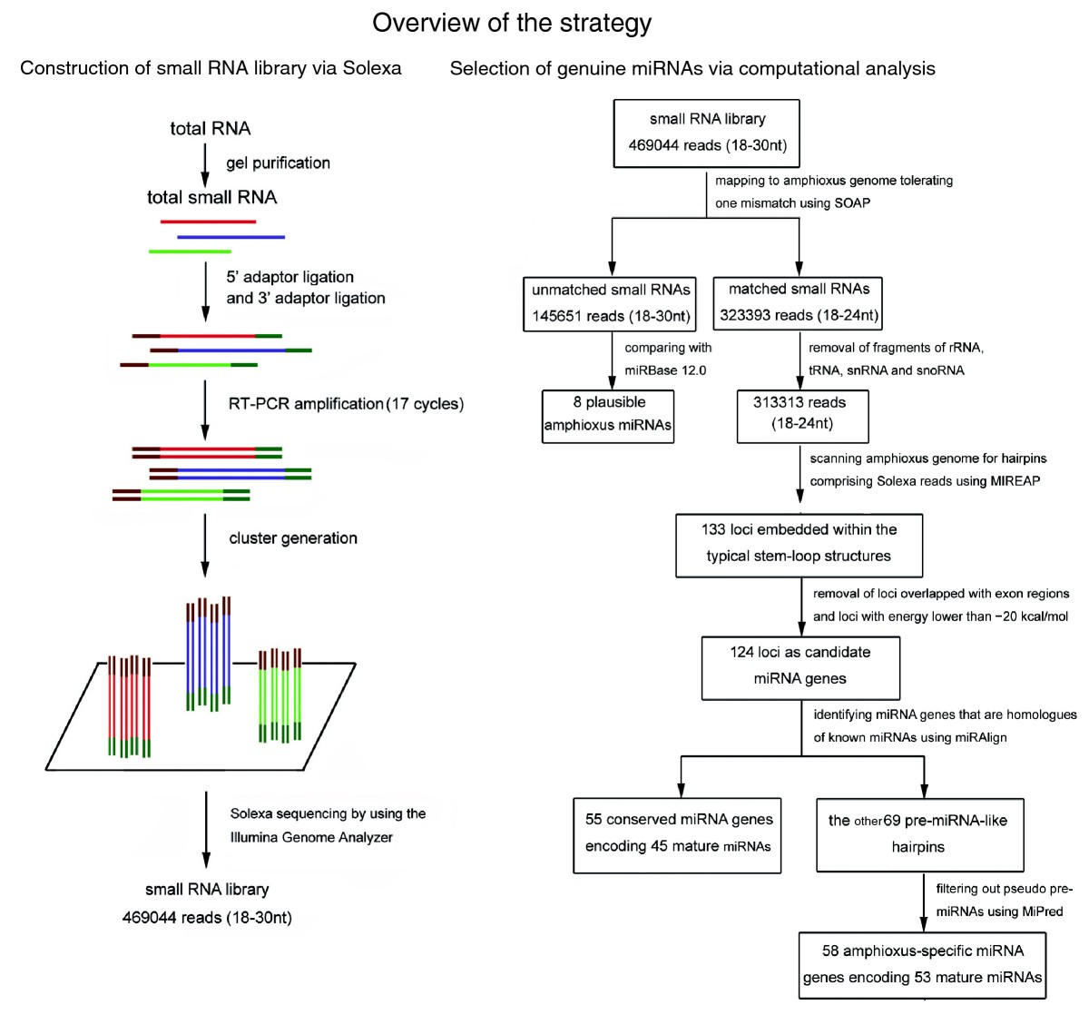 Identification and characterization of novel amphioxus microRNAs by ...