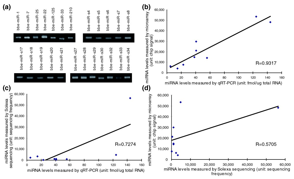 Identification and characterization of novel amphioxus micrornas by figure 3 ccuart Choice Image