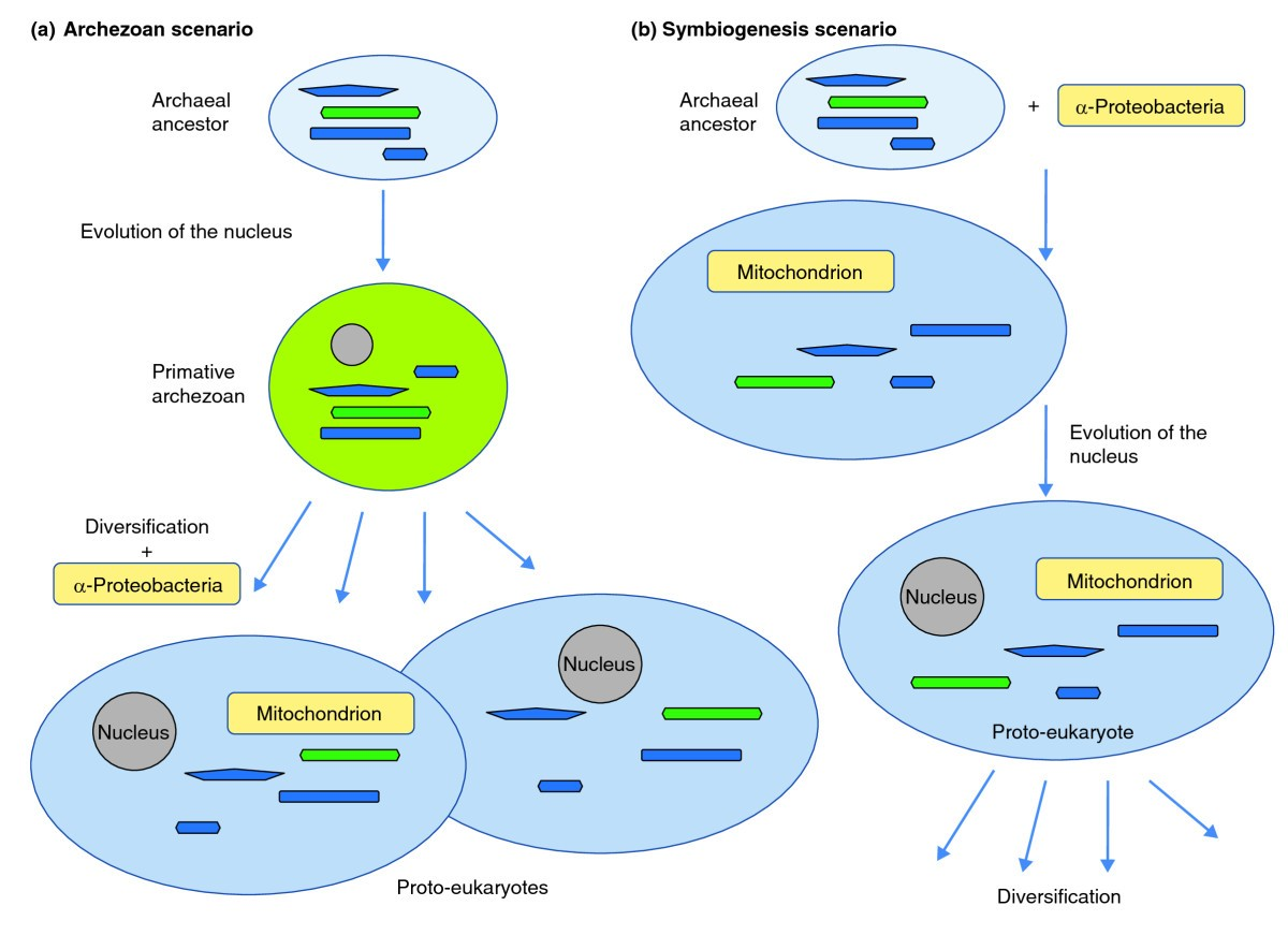 The Origin And Early Evolution Of Eukaryotes In Light Figure Depicts Typical Structures A Eukaryotic Plant Cell 5