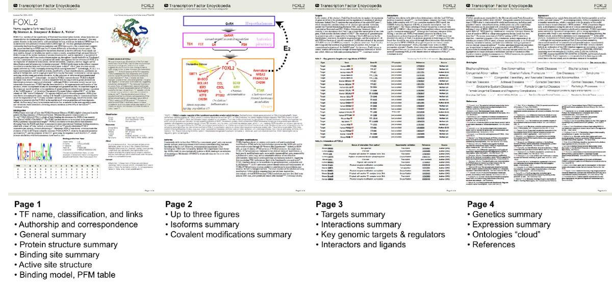 The Transcription Factor Encyclopedia Genome Biology Full Text