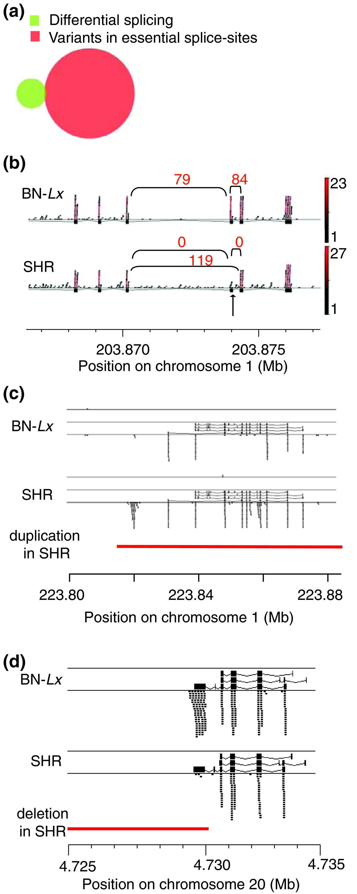 Genetic Basis Of Transcriptome Differences Between The Founder Remington 870 Diagram Submited Images Figure 6