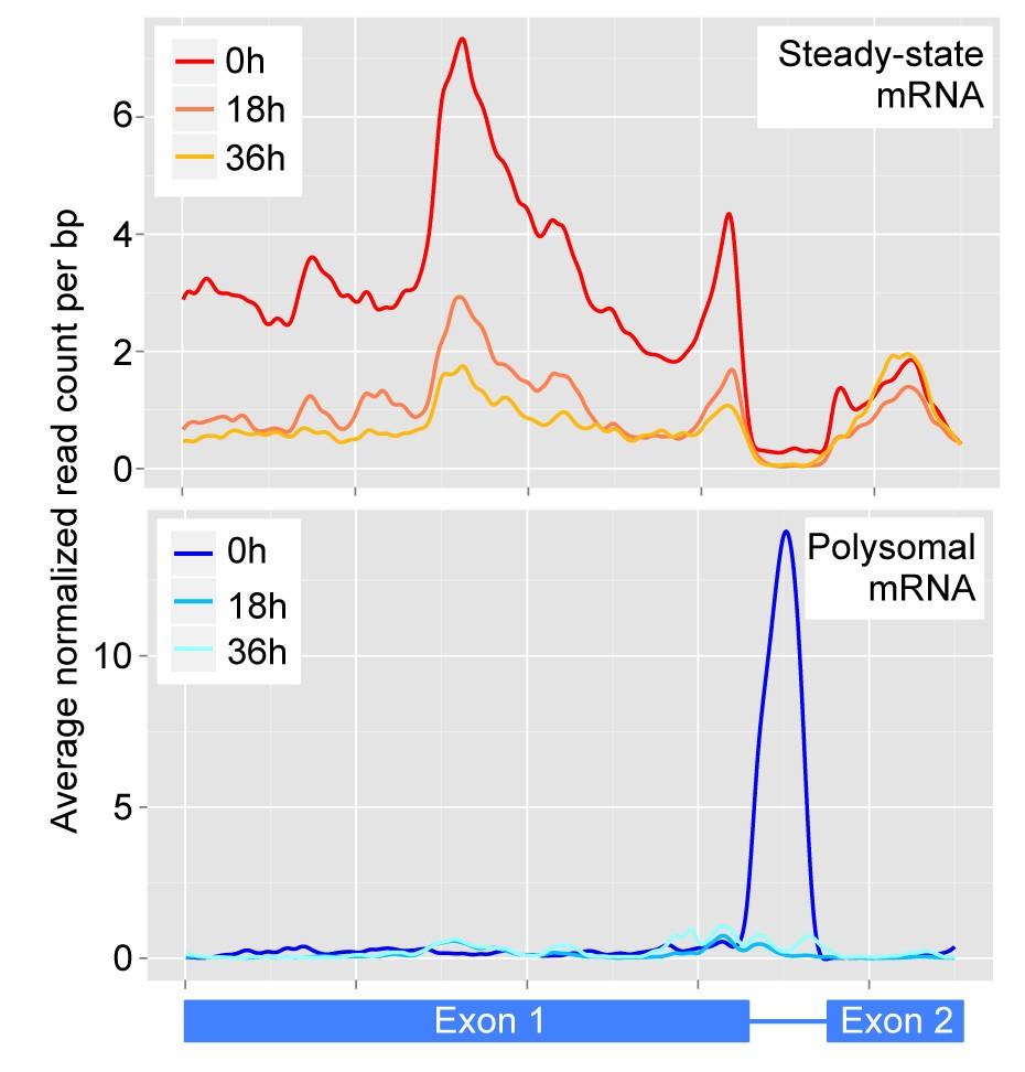 Polysome Profiling Reveals Translational Control Of Gene Expression