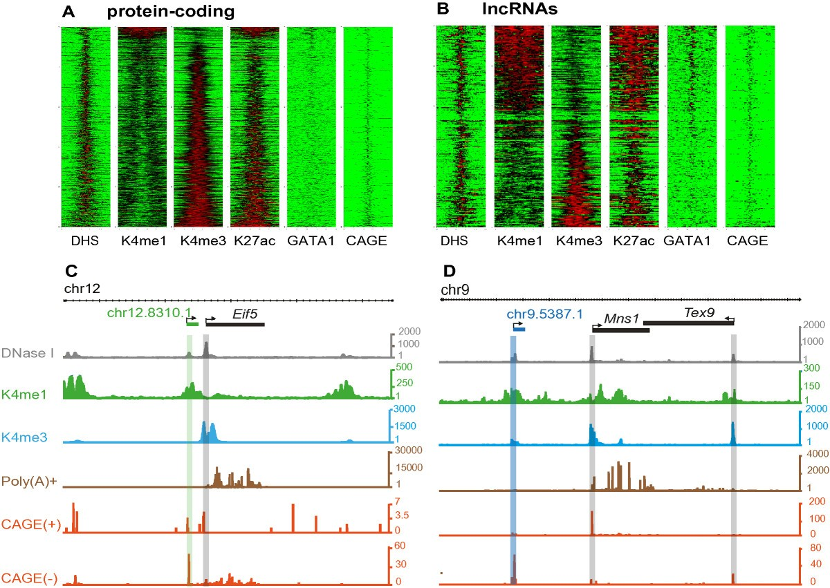 Chromatin Signatures At Transcriptional Start Sites Separate Two